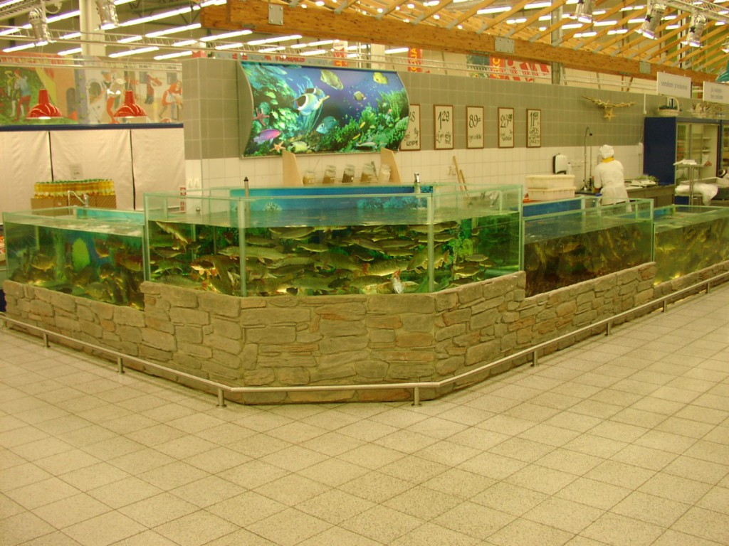 Аквариумы для магазинов живой рыбы